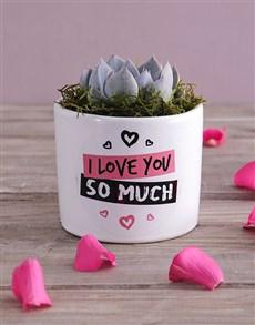 flowers: Love You Succulent!