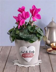 plants: Cerise Cyclamen in Heart Cement Pot!