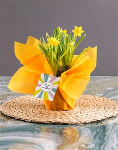 gifts: Yellow Daffodil Plants In Yellow Wrapping!