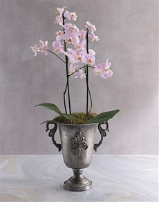flowers: Two Stemmed Orchid In A Silver Pot!