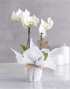 plants: White Midi Orchid Of Wellness In Wrapping!