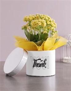 flowers: Thank You Kalanchoe Hatbox!