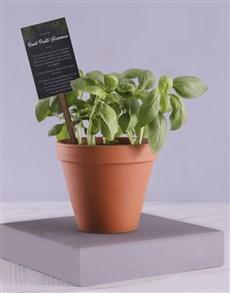 plants: Herb Box With Secret Recipe!