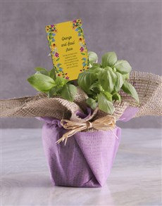 plants: Basil Plant with Special Recipe !