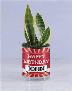 plants: Personalised Happy Birthday Sanseveria!