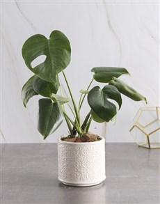 plants: Trendy Monster Leaf Planter!