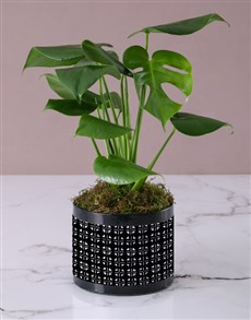 plants: Personalised Monster Leaf in Black Box!