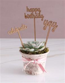 flowers: Birthday Celebration Succulent!