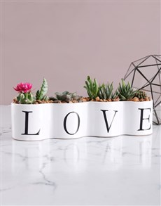 flowers: Cacti and Succulents in Love Pot!