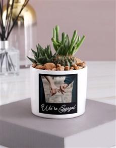 plants: Personalised Engagement Succulent Mix!