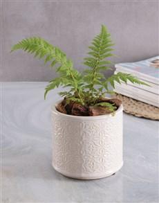 flowers: Fern in Glazed Cream Pot!