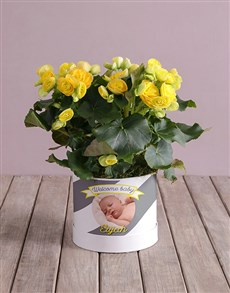 plants: Personalised Begonia Baby Arrangement!