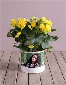 plants: Personalised Begonia Thank You Arrangement!