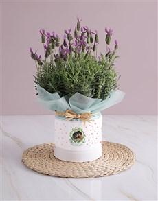 gifts: Wrinkle Together Lavender Photo Vase!