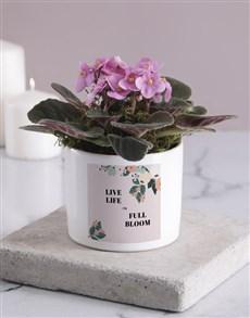 flowers: Life In Full Bloom African Violet!