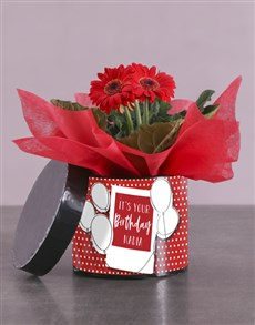 gifts: Birthday Gerbera Plant Gift In Hatbox!