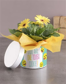 gifts: Tough Cookie Gerbera Plant Gift In Hatbox!