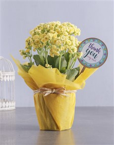 flowers: Yellow Kalanchoe Gift Of Gratitude!