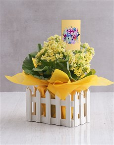 flowers: Be Happy Kalanchoe Gift!