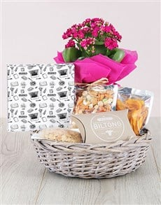 flowers: Kalanchoe And Gourmet Gift Hamper !