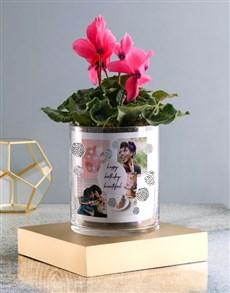 plants: Happy Birthday Cerise Cyclamen In A Vase!