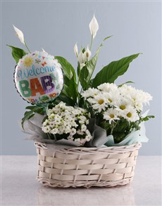 flowers: Welcome Baby Spathiphyllum Variety Basket !