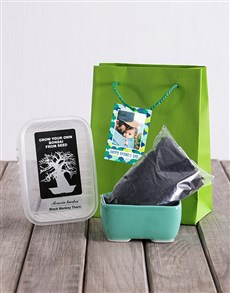 gifts: Fathers Day Grow Your Own Bonsai Lime Delights!