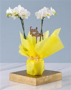 plants: White Midi Feel Good Orchid In Wrapping!