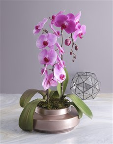 flowers: Two Stemmed Orchid In A Rose Gold Planter!