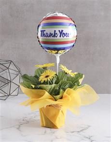 gifts: Radiant Gerbera Blooms!