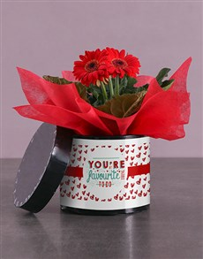 gifts: Red Favourite Gerbera Hatbox!