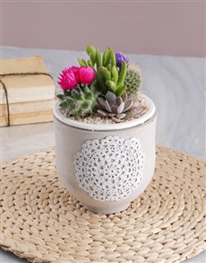 flowers: Succulent in Doily Pattern Pot!