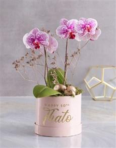 plants: Ornate Beauty Orchid Hat Box!