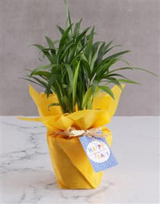 flowers: Happy You Day Areca Bamboo!