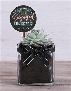 plants: Personalised Congrats On Engagement Succulent!