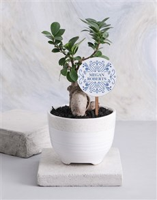 gifts: Personalised Friendly Ficus Bonsai!