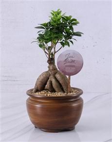 plants: Personalised Ficus Bonsai Gift!