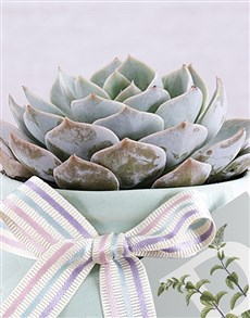 flowers: Personalised Minty Succulent!