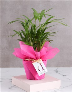 gifts: Personalised Wrapped Areca Bamboo!