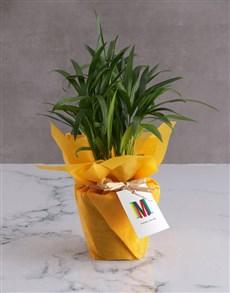 flowers: Personalised Cheerful Areca Bamboo!