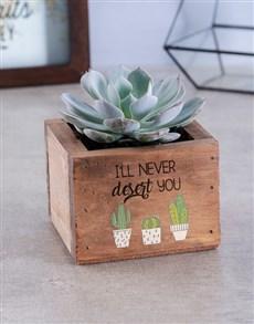 flowers: Never Desert You Succulent !