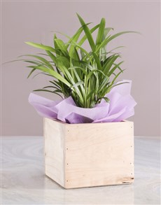 flowers: Bold Bamboo In A Rustic Crate!