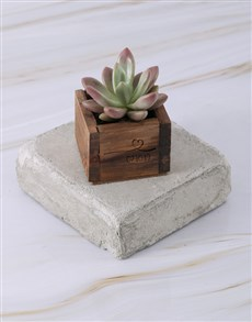 plants: Personalised Special Day Succulent!