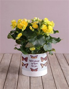 plants: Always Be There Yellow Begonias!