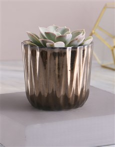 plants: Single Succulent In Bronze Pot!