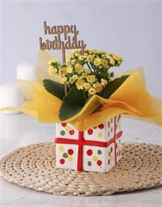 gifts: Yellow Kalanchoe Birthday Gift!