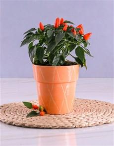 flowers: Orange Chilli Plant in Peach Ceramic Pot!
