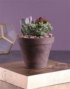 flowers: Succulent Sensation In A Square Vase!