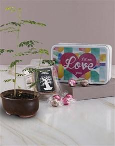 flowers: Love Grow Baobab Tree !