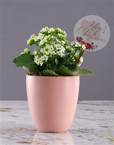 flowers: Heres to Women Kalanchoe Plant!